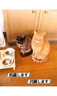 f:id:yamagatamyclus:20110320140843j:image
