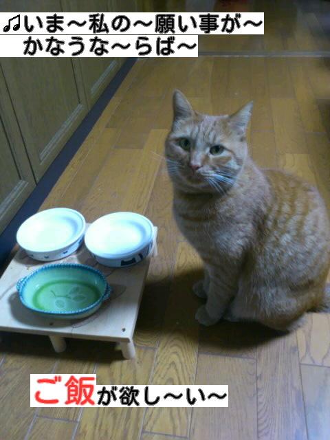 f:id:yamagatamyclus:20121202181716j:image
