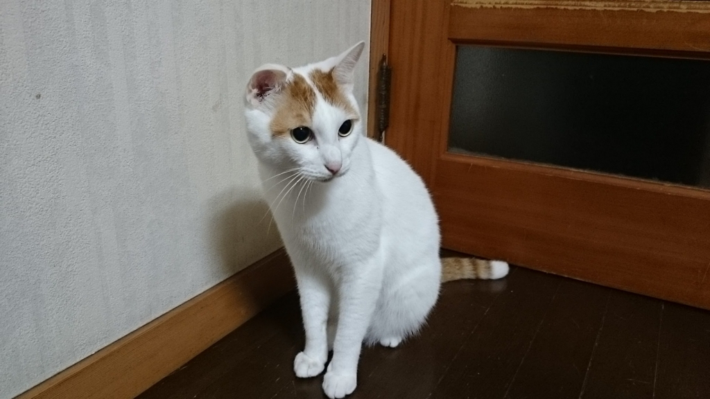 f:id:yamagatatakashi:20160828180731j:plain