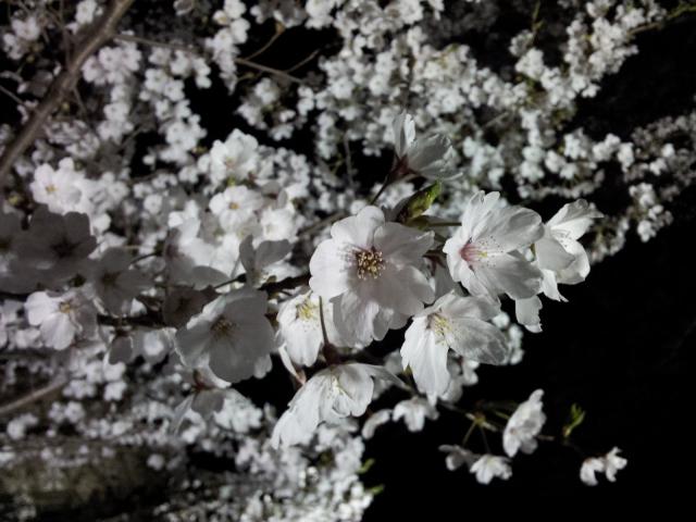 f:id:yamaguchikeiei:20120410112804j:image