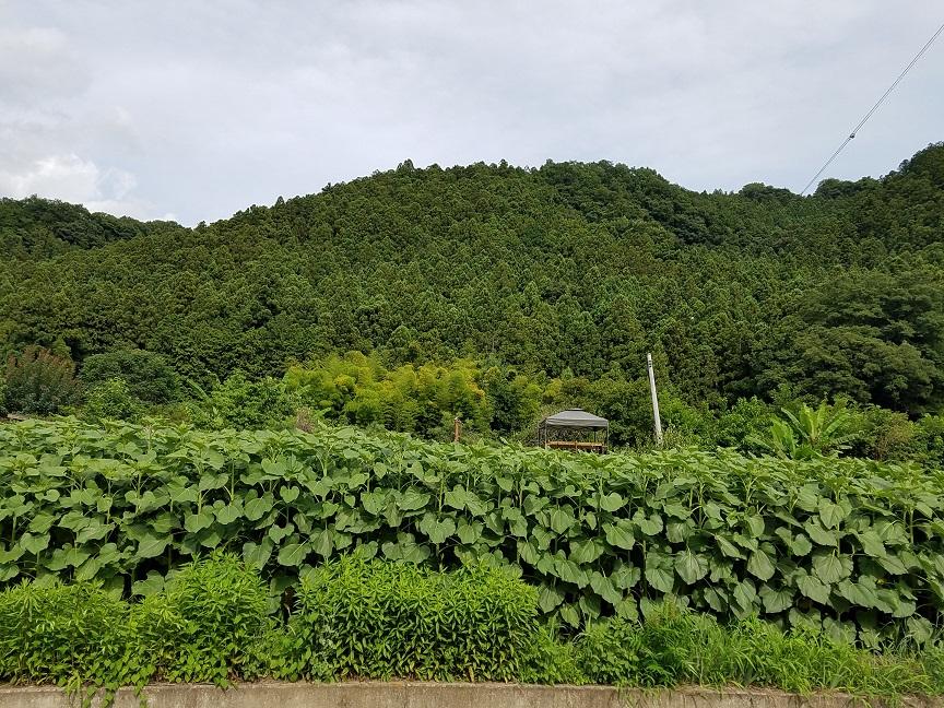 f:id:yamaguchinouen:20180713221720j:plain