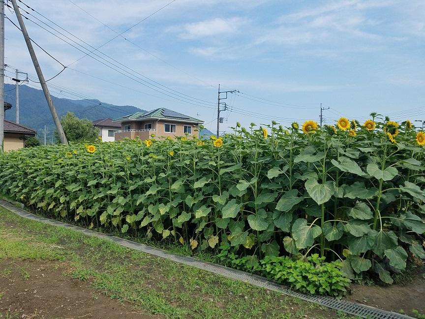 f:id:yamaguchinouen:20180717232455j:plain