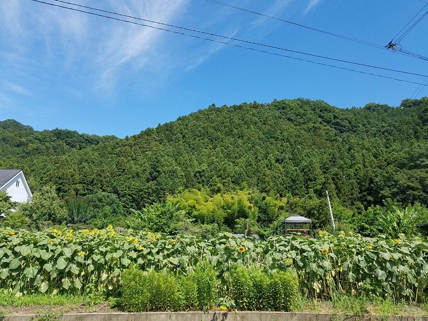 f:id:yamaguchinouen:20180729210112j:plain