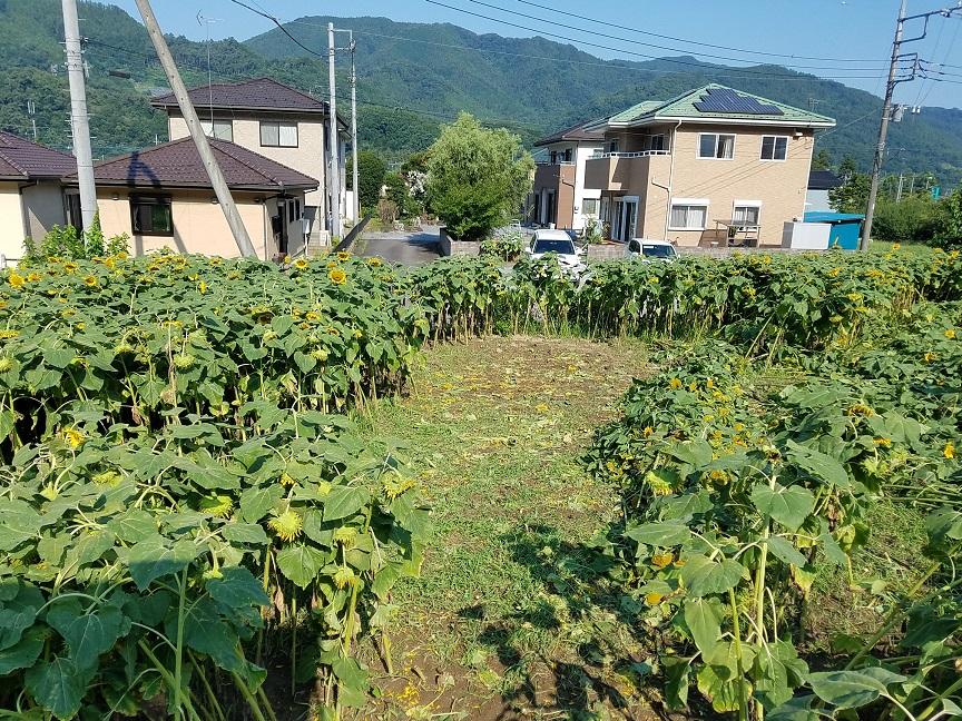 f:id:yamaguchinouen:20180801213434j:plain