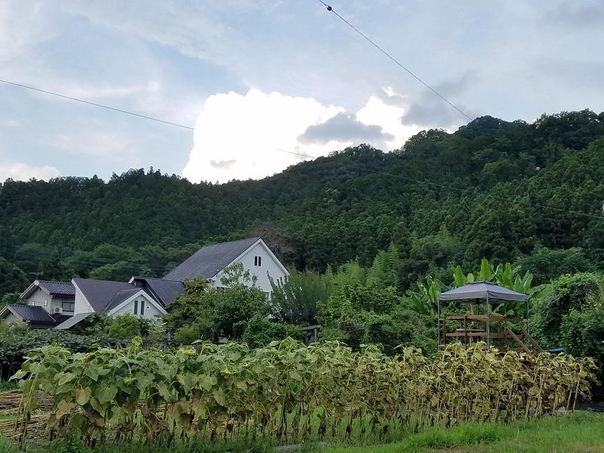 f:id:yamaguchinouen:20180810213501j:plain