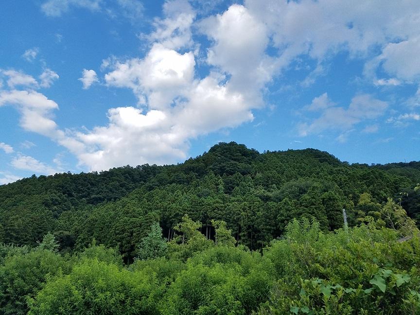 f:id:yamaguchinouen:20180811222724j:plain
