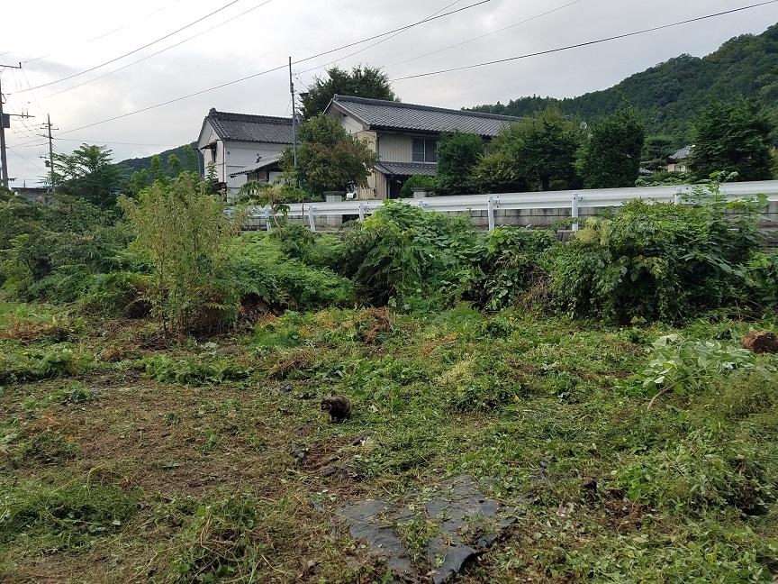 f:id:yamaguchinouen:20180911203846j:plain