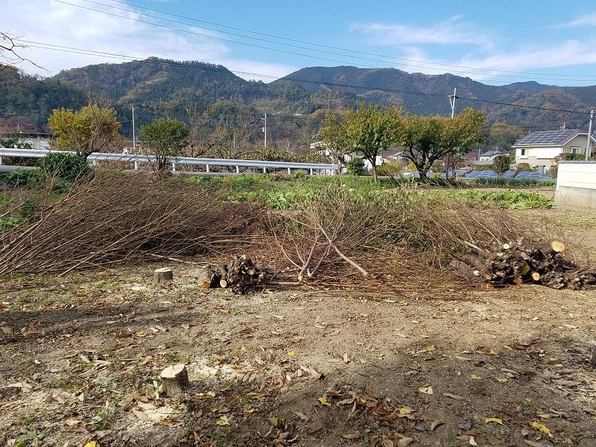 f:id:yamaguchinouen:20181126211249j:plain