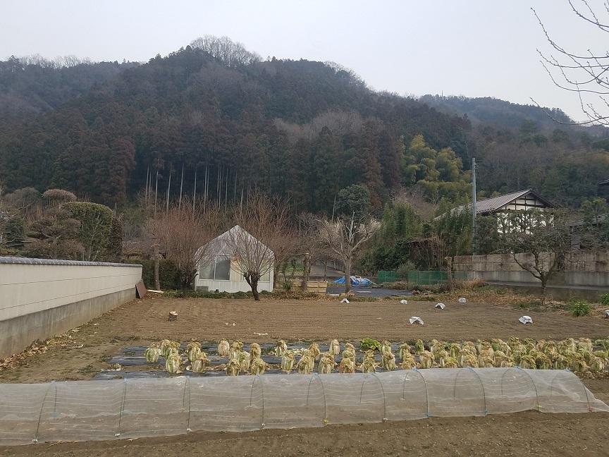 f:id:yamaguchinouen:20190219230655j:plain