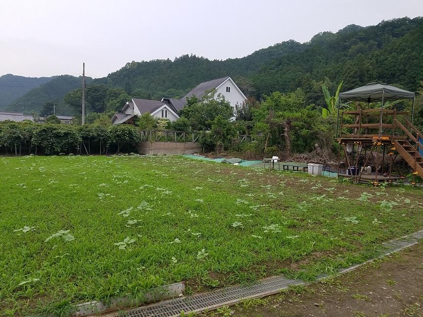 f:id:yamaguchinouen:20190713214444j:plain