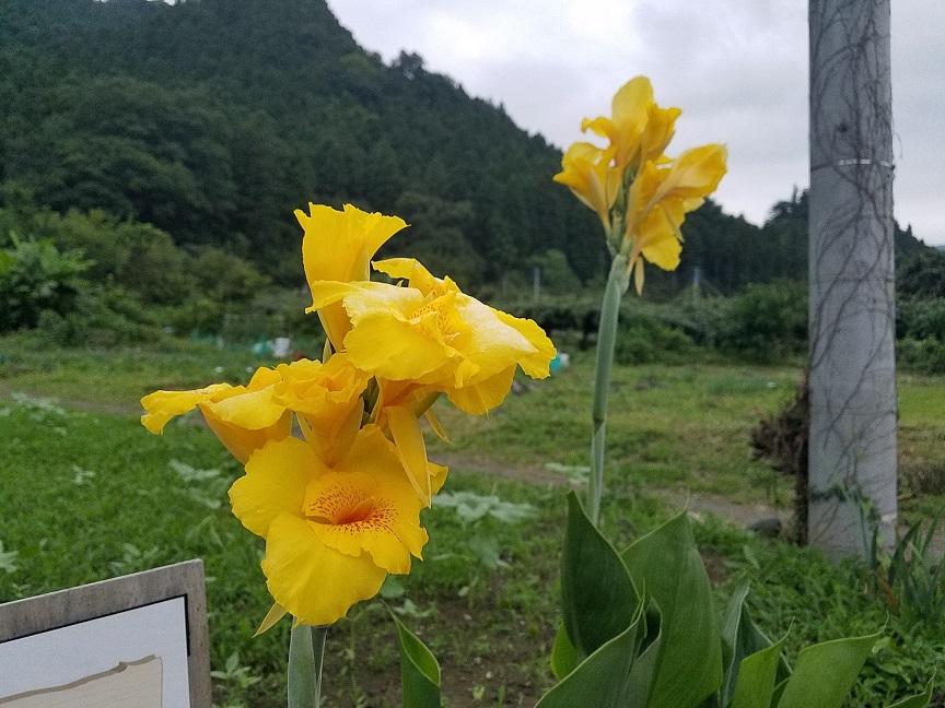f:id:yamaguchinouen:20190715230013j:plain