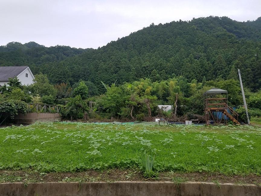 f:id:yamaguchinouen:20190716230114j:plain