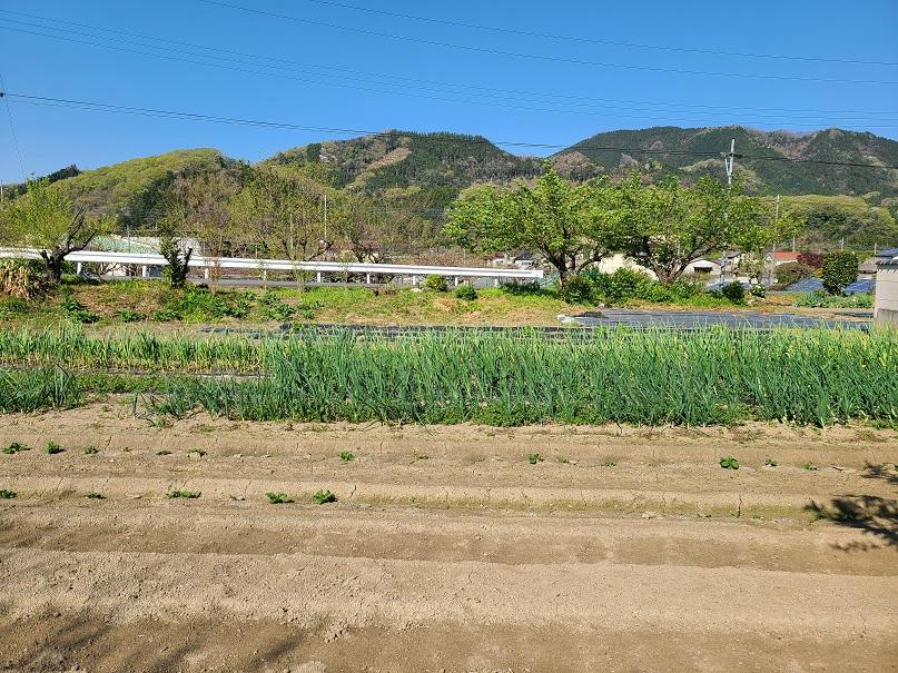 f:id:yamaguchinouen:20210409231455j:plain