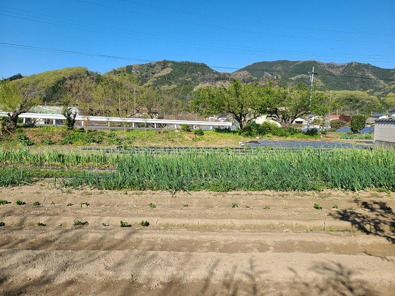 f:id:yamaguchinouen:20210410234556j:plain