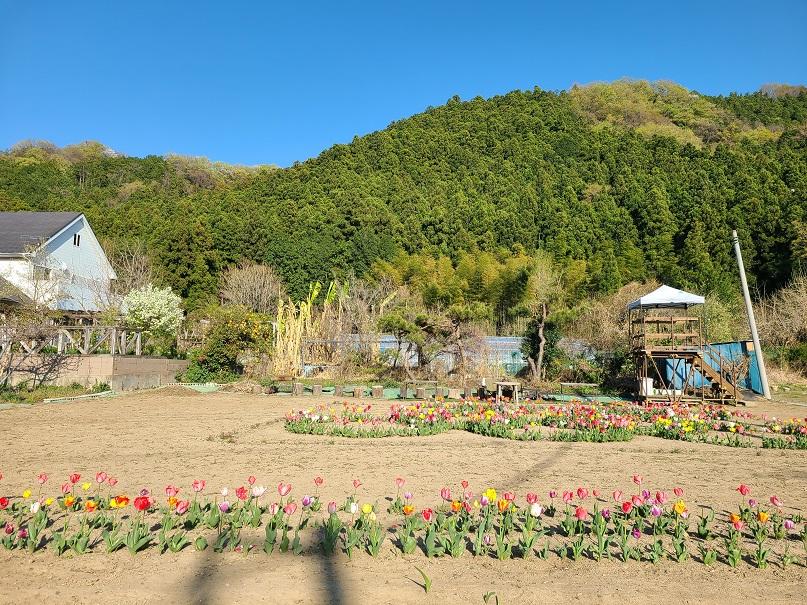 f:id:yamaguchinouen:20210410234849j:plain