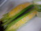 今季のモロコシ初収穫。まずまず:-)
