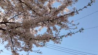 f:id:yamahiro0504:20180401111123j:plain