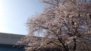 f:id:yamahiro0504:20180401111144j:plain