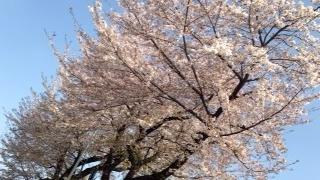 f:id:yamahiro0504:20180401111211j:plain
