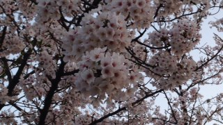 f:id:yamahiro0504:20180401112005j:plain
