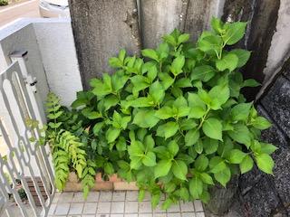 f:id:yamahiro0504:20180512111244j:plain