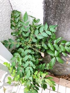 f:id:yamahiro0504:20200412131741j:plain