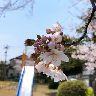 f:id:yamahiro0504:20200412141506j:plain