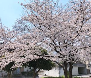 f:id:yamahiro0504:20200412141600j:plain