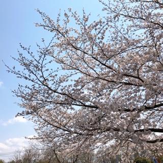 f:id:yamahiro0504:20200412141614j:plain