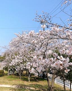 f:id:yamahiro0504:20200412142249j:plain