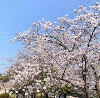 f:id:yamahiro0504:20200412142302j:plain