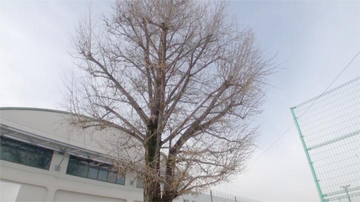 f:id:yamajikai:20141214163353j:image:w360