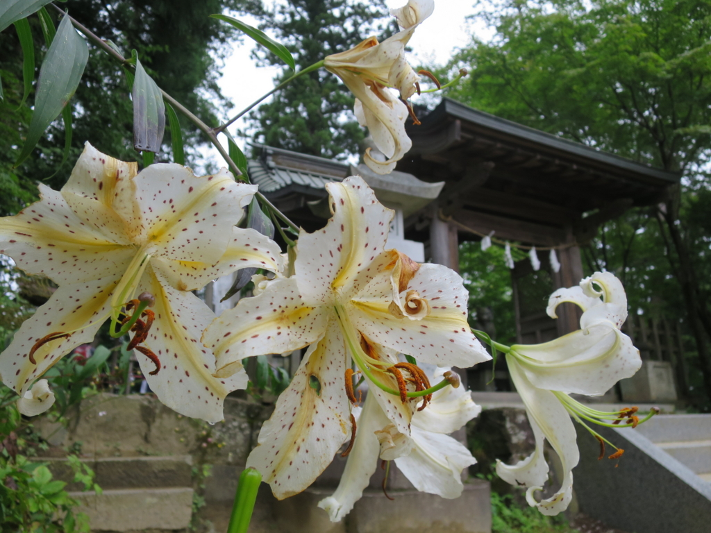 f:id:yamajoshi:20160819111755j:plain
