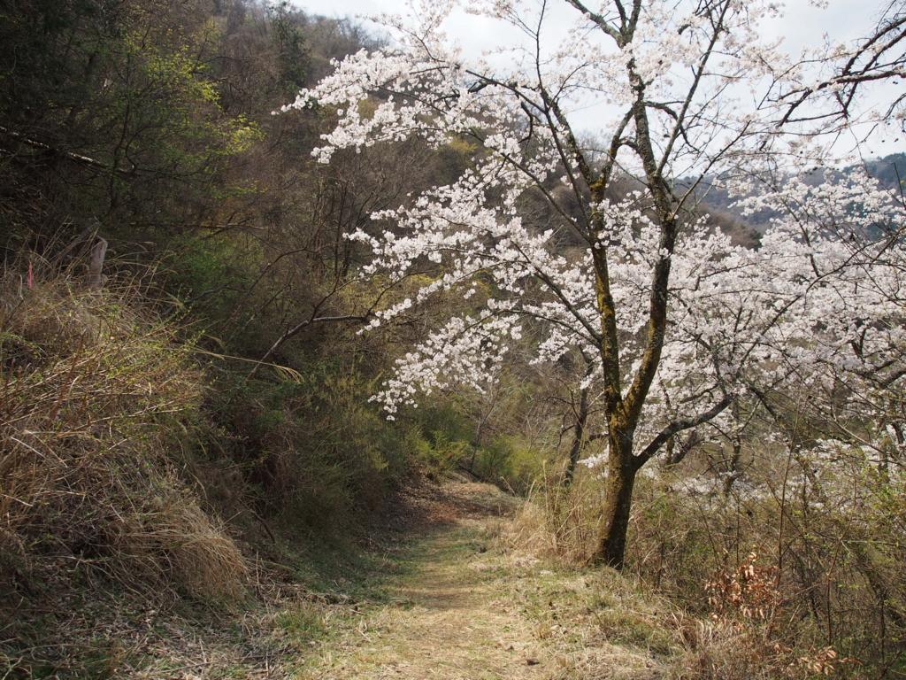 f:id:yamajoshi:20170422130132j:plain