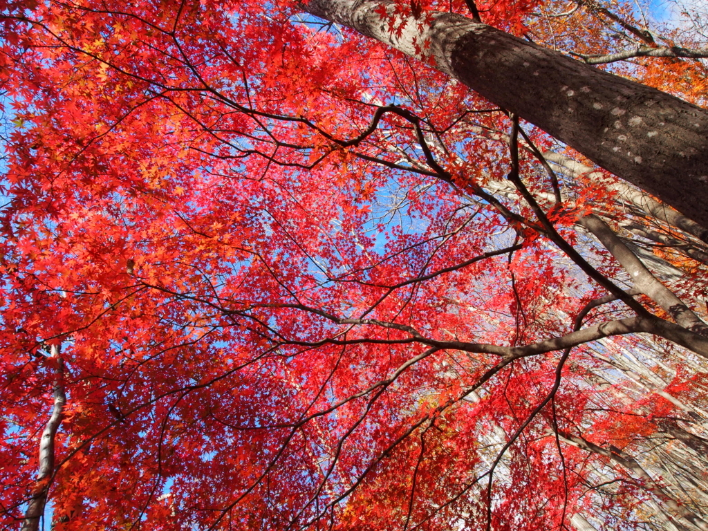 f:id:yamajoshi:20171118145032j:plain