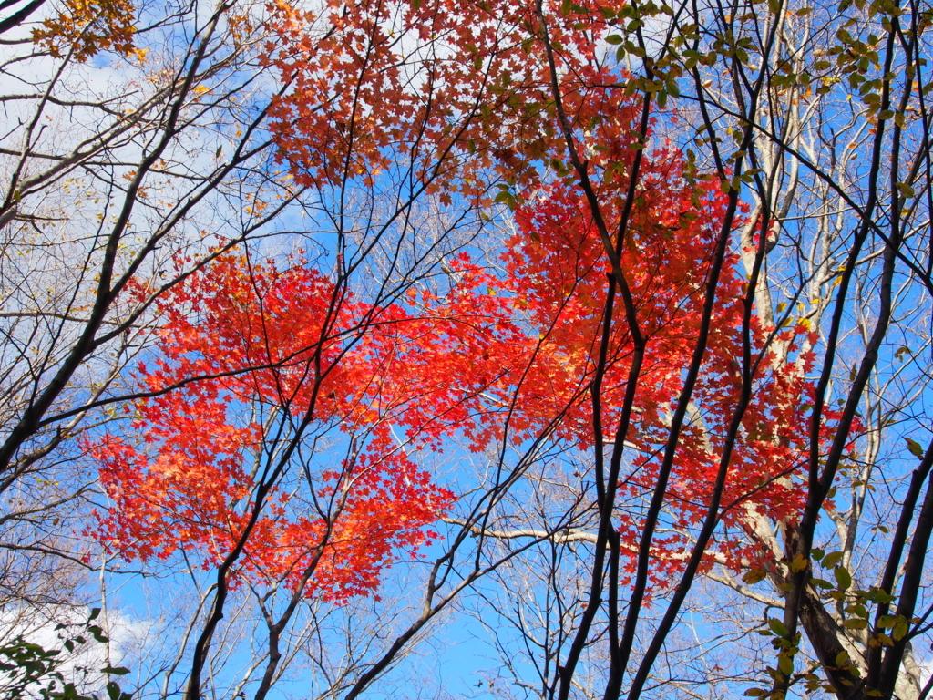 f:id:yamajoshi:20171125194444j:plain