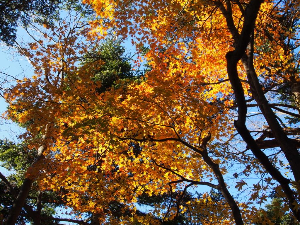 f:id:yamajoshi:20171202132134j:plain