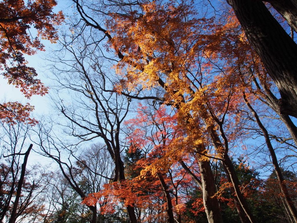 f:id:yamajoshi:20171216200544j:plain