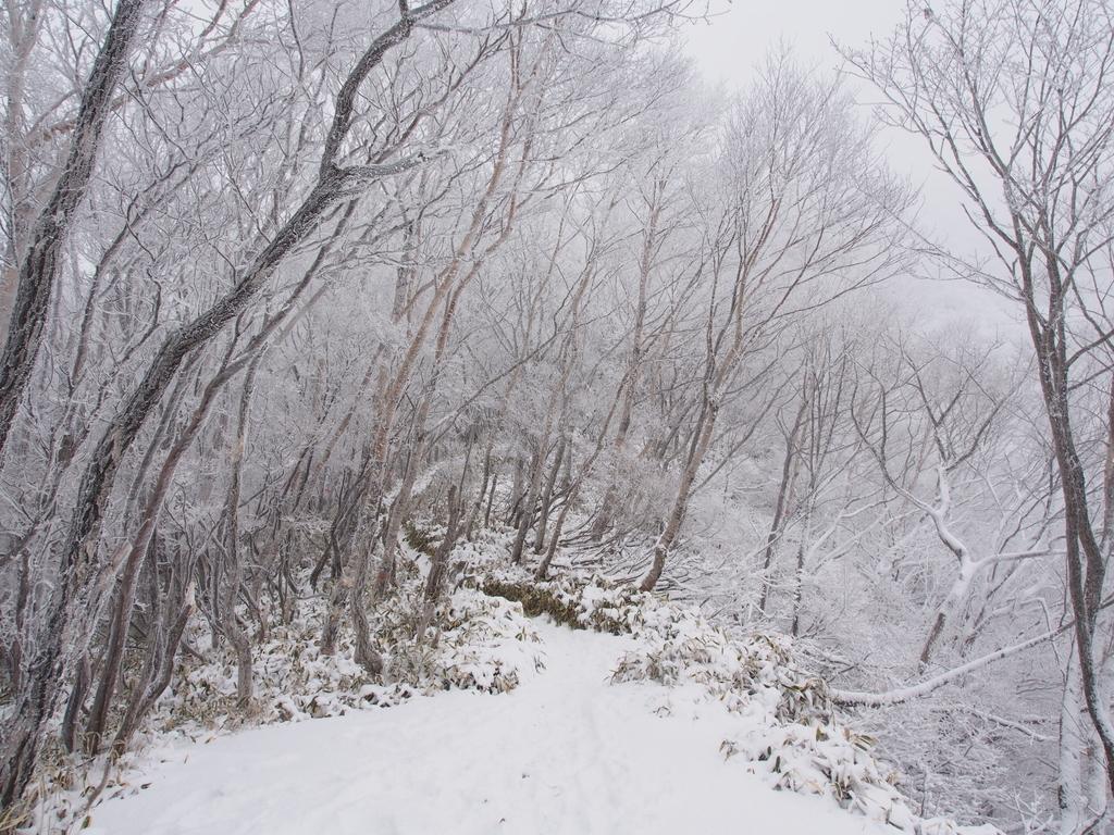f:id:yamajoshi:20190127215511j:plain