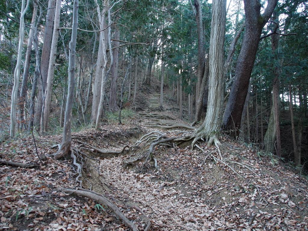 f:id:yamajoshi:20190211164303j:plain