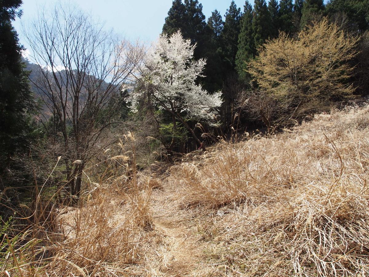 f:id:yamajoshi:20190513192551j:plain