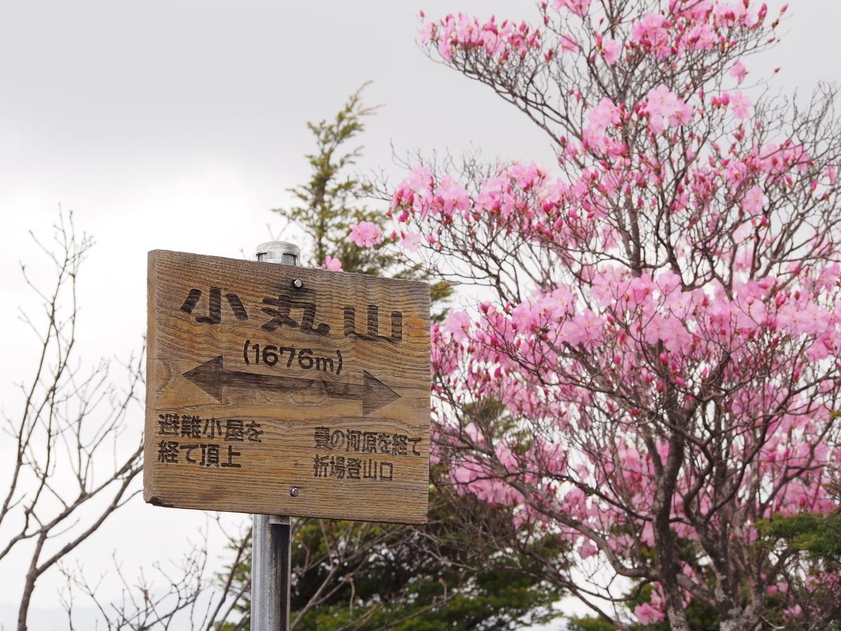 f:id:yamajoshi:20190616175030j:plain