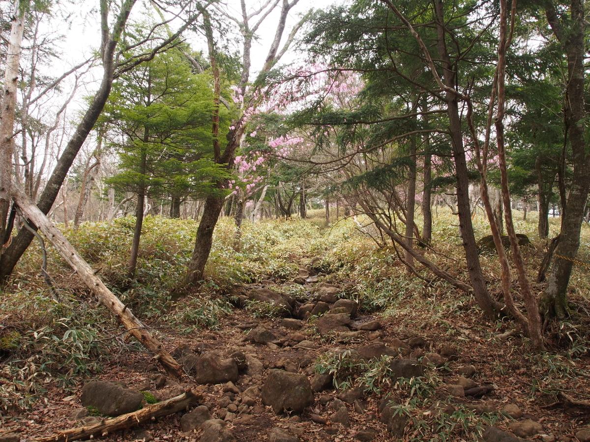 f:id:yamajoshi:20190616185133j:plain