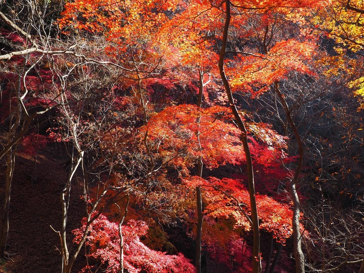 f:id:yamajoshi:20200118152209j:plain