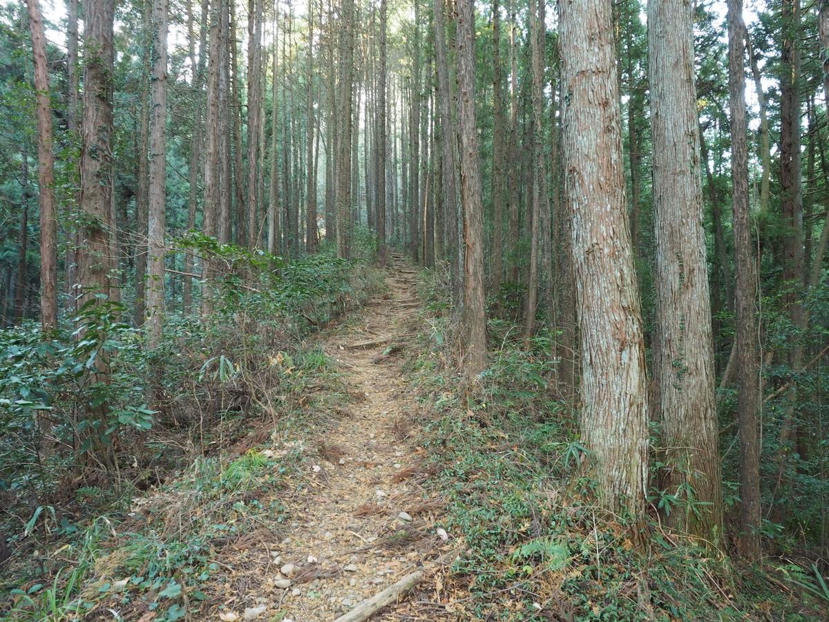 f:id:yamajoshi:20200205180017j:plain