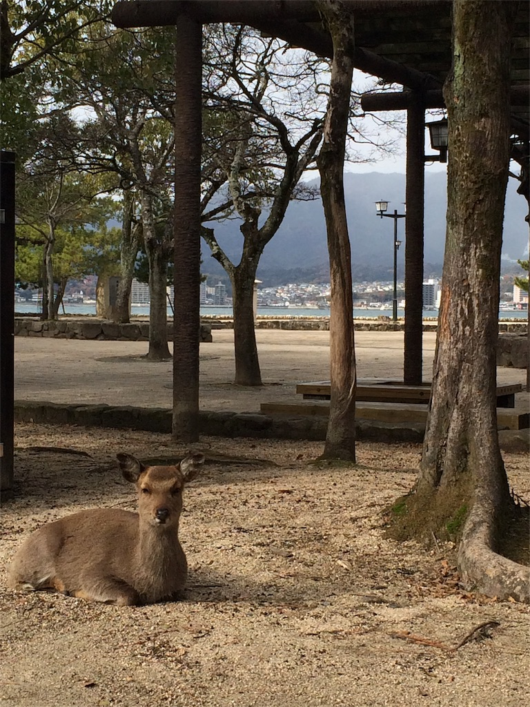 f:id:yamako8712:20170725163523j:image