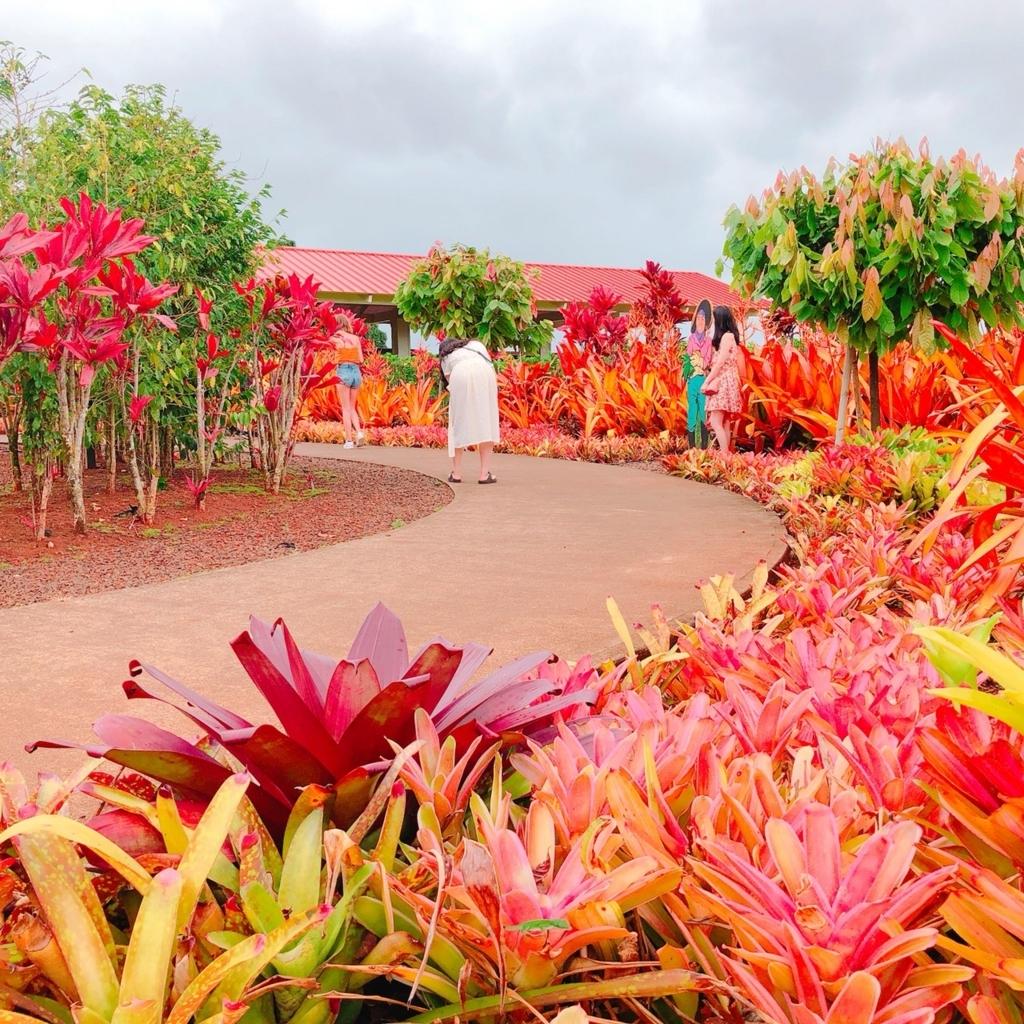 色鮮やかな植物の写真