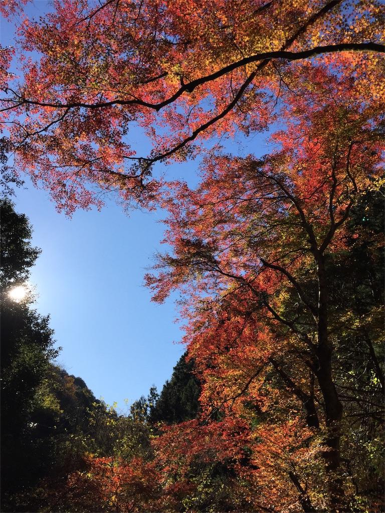 f:id:yamakuniaozora:20171119093307j:image