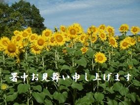f:id:yamamayuga:20210720043803j:plain