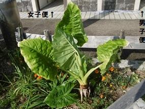 f:id:yamamayuga:20211012013409j:plain